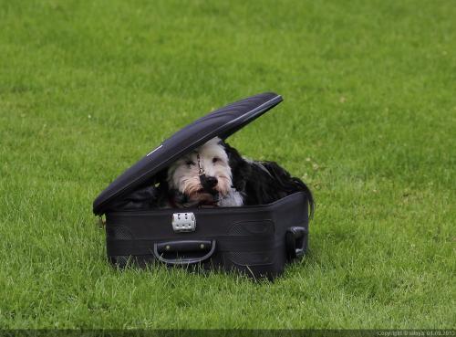 Dog Day OHNE-mich